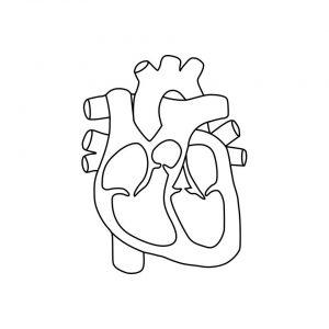 schemat serca